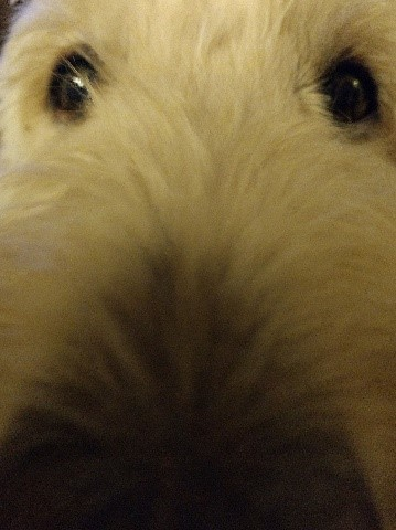 Does my nose look big when I get too close to the camera?